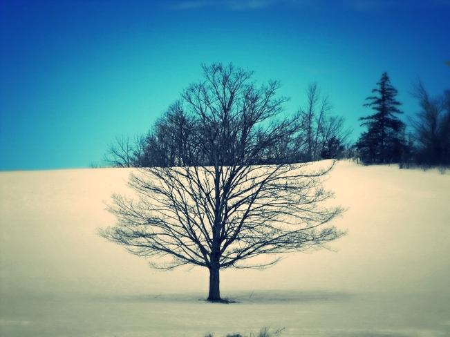 another winter picture Hamilton, Ontario Canada