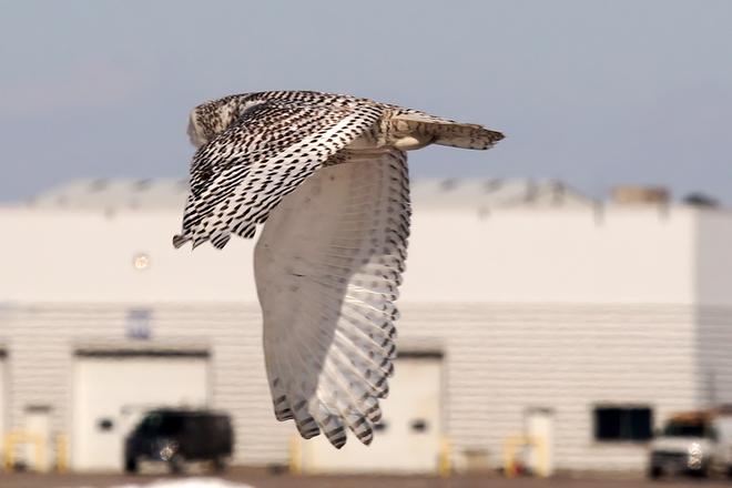 Owls and planes. Toronto, Ontario Canada