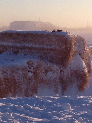keeping warm Lockport, Manitoba Canada