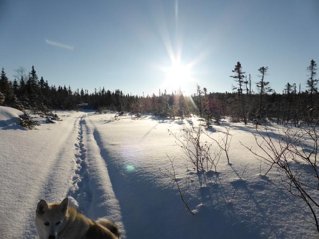 On The Trail Birchy Bay, Newfoundland and Labrador Canada