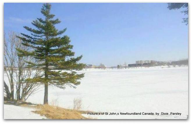 Winter wonderland St. John's, Newfoundland and Labrador Canada