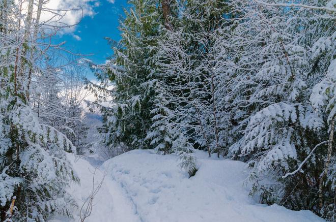 snow day Revelstoke, British Columbia Canada
