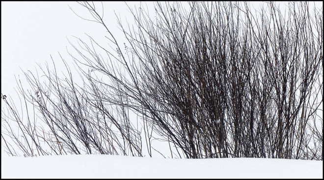 Sheriff Creek bushes. Elliot Lake, Ontario Canada