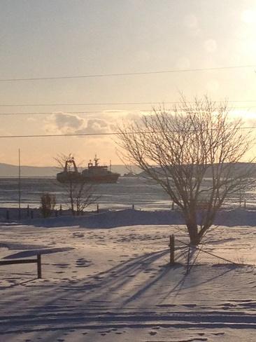 Ocean Prawns entering Harbour! Harbour Grace, Newfoundland and Labrador Canada