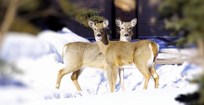 two cuties St. Albert, Alberta Canada