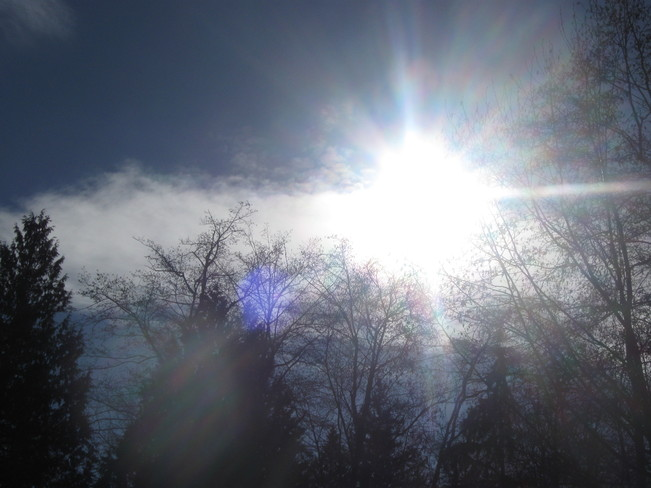 sunshine!!! Surrey, British Columbia Canada