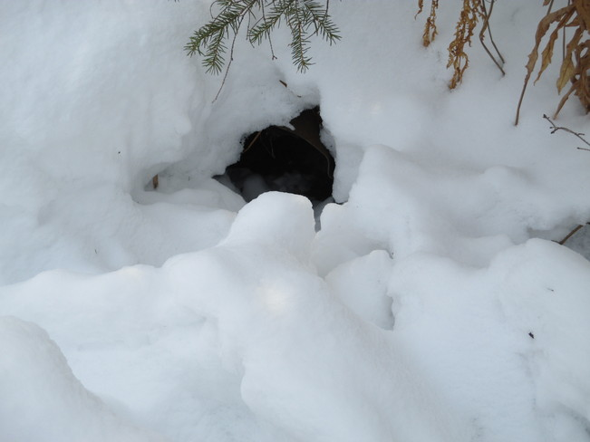 Foxhole Lively, Ontario Canada