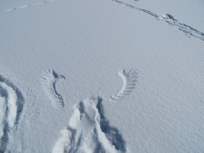snow prints Mount Hope, Ontario Canada