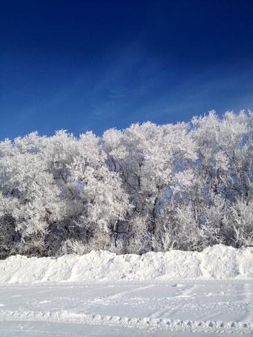 frosty Saskatoon, Saskatchewan Canada