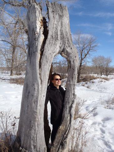 Old Stumpy Calgary, Alberta Canada