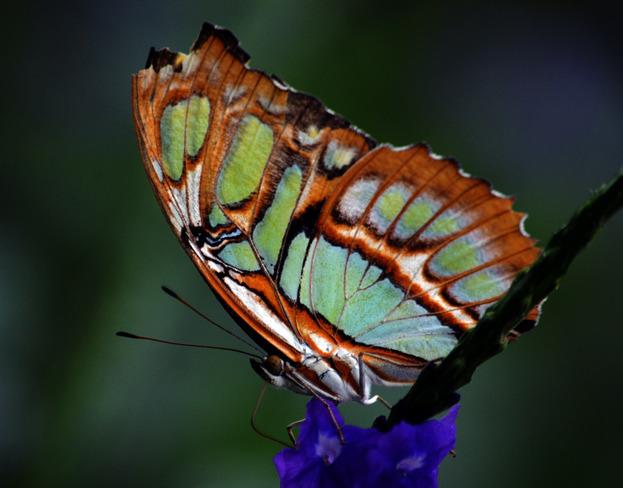 Butterfly Scarborough, Ontario Canada