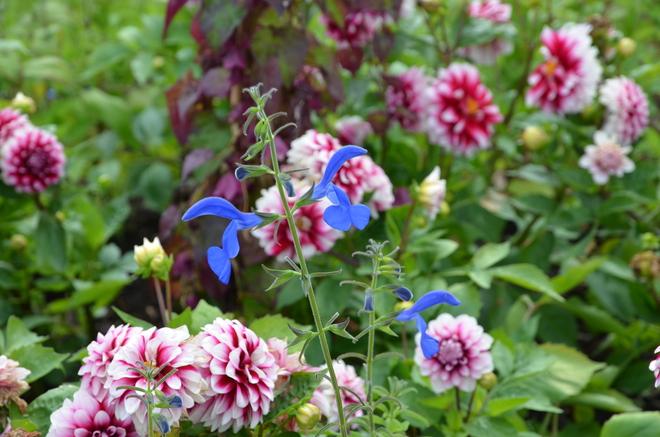 flower Oslo, Norway