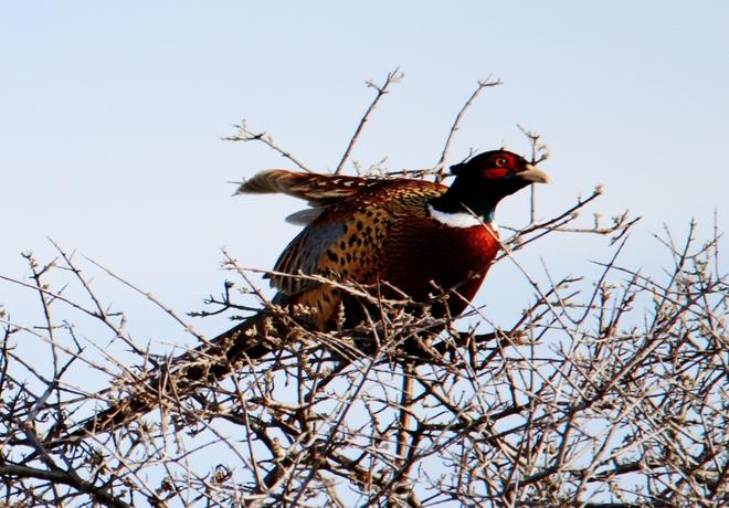 pheasant Brooks, Alberta Canada