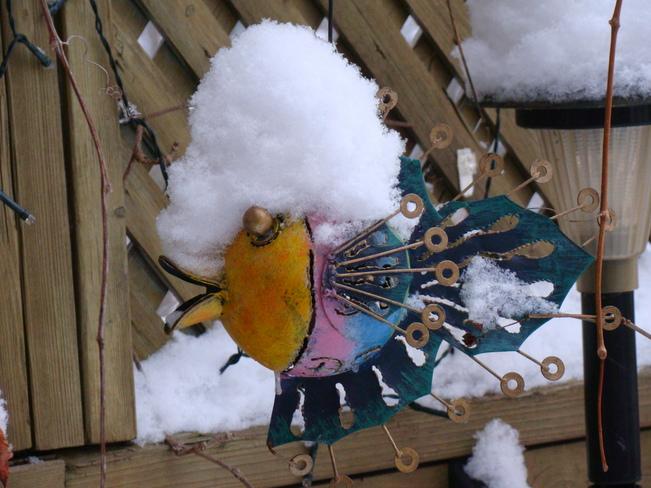 Oh Snow! Whitby, Ontario Canada