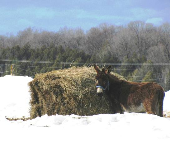 Love donkeys Navan, Ontario Canada