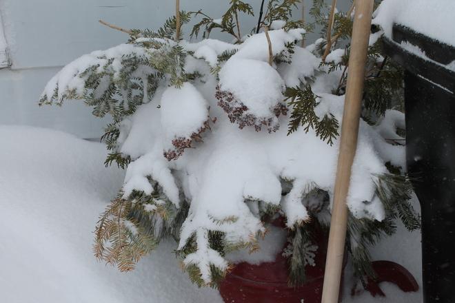 Another Snowstorm Bathurst, New Brunswick Canada