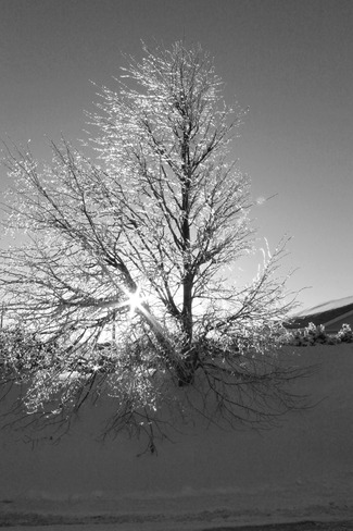 Diamond tree Sherwood, Prince Edward Island Canada