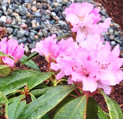 Rainy Saturday morning blooms Vancouver, British Columbia Canada
