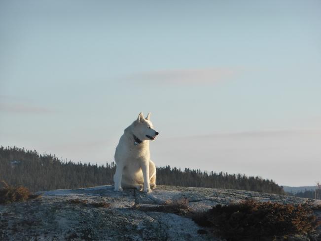 Watching The Sunrise Birchy Bay, Newfoundland and Labrador Canada