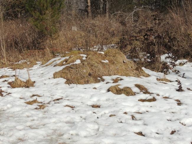 Spring Sticks Out of the Snow Castlegar, British Columbia Canada
