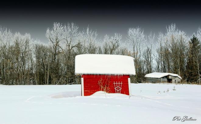 Brilliant Red Tyndall, Manitoba Canada