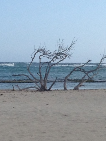 Baby Beach Oranjestad, Aruba