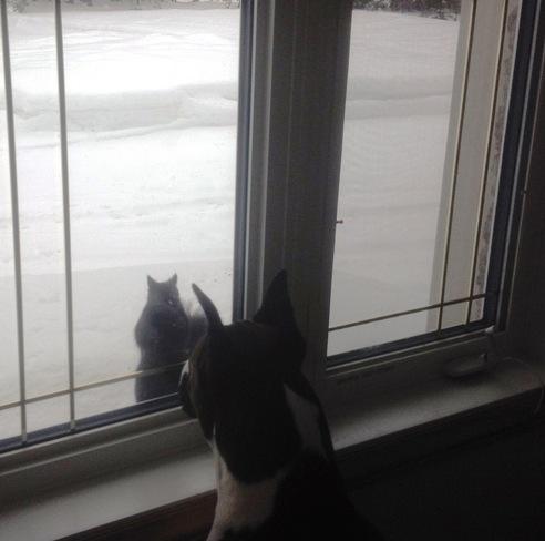 PLEASE PLEASE PLEASE , LET ME IN !!!!!!!1 Sault Ste. Marie, Ontario Canada
