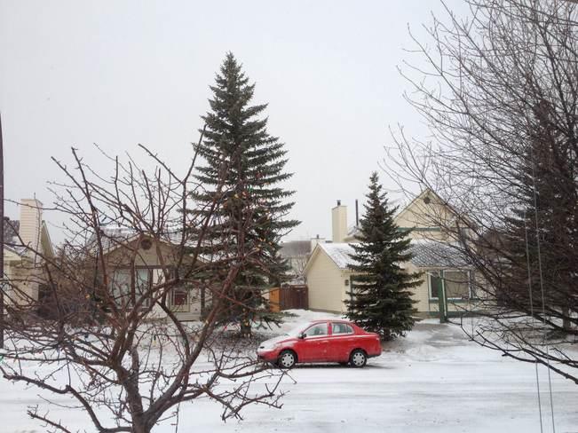 Hello Spring! Calgary, Alberta Canada