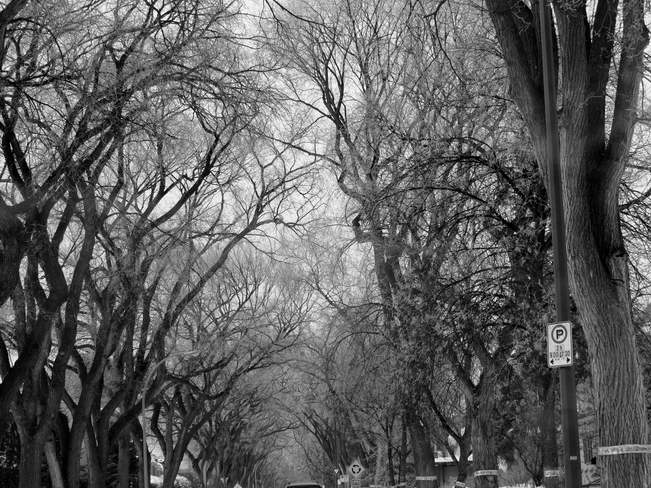 Spring frost Winnipeg, Manitoba Canada
