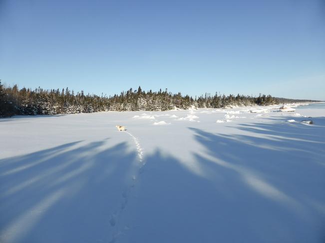 Morning Shadows Birchy Bay, Newfoundland and Labrador Canada