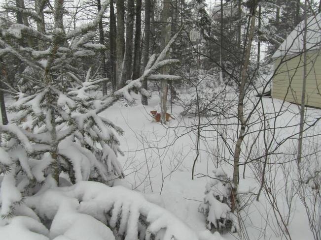 Puppy in the snow Lower Sackville, Nova Scotia Canada