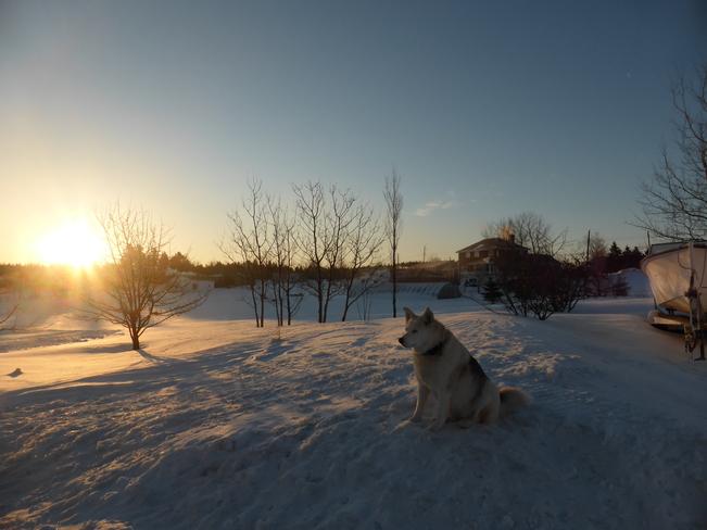 Sunrise Birchy Bay, Newfoundland and Labrador Canada