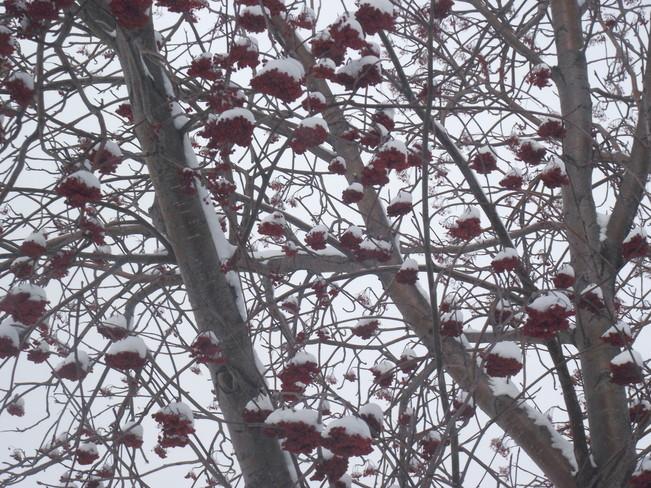 rowenberry sundaes for the birds