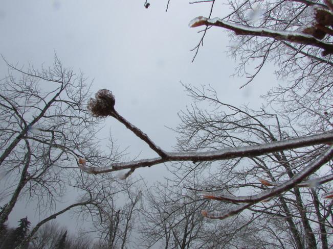 Freezing Rain Miramichi, New Brunswick Canada