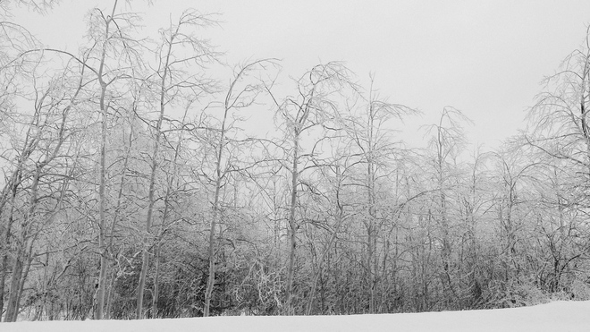 Birches by Ritchie Lake Quispamsis, New Brunswick Canada