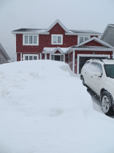 has to be Sheila's brush St. John's, Newfoundland and Labrador Canada