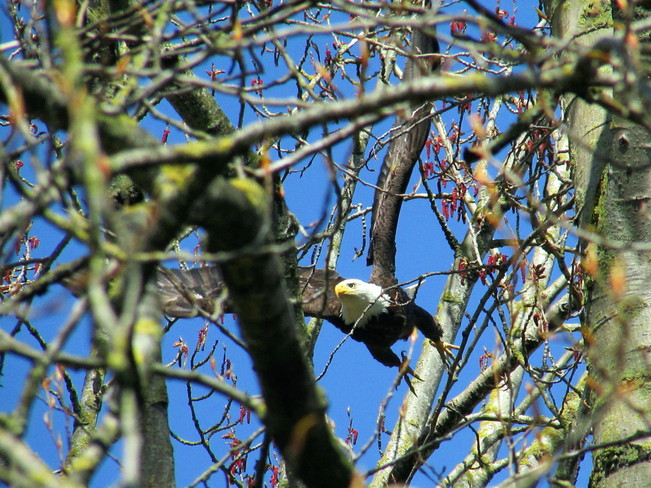See the Buds Chilliwack, British Columbia Canada