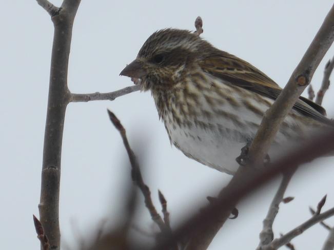 Sparrow Birchy Bay, Newfoundland and Labrador Canada