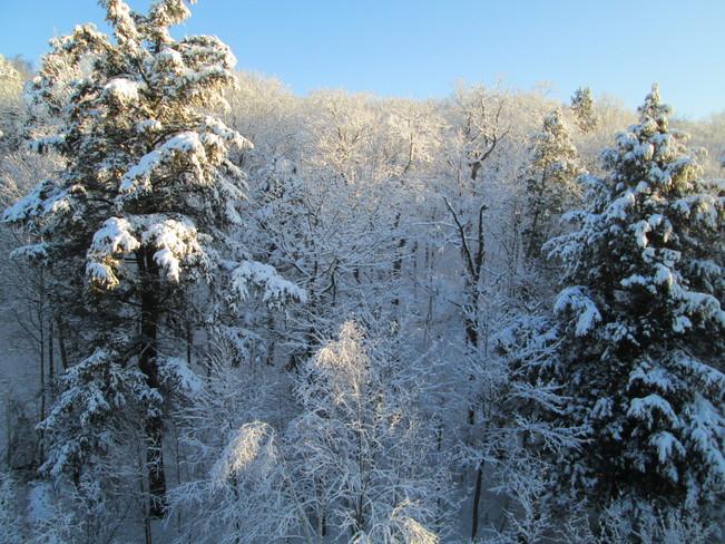 Snow Behind My Home Elliot Lake, Ontario Canada