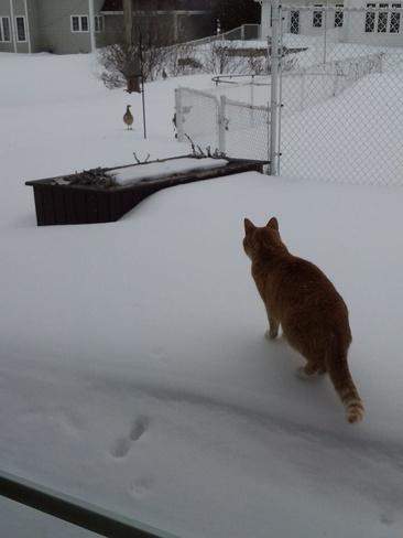 Max the Cat Moncton, New Brunswick Canada