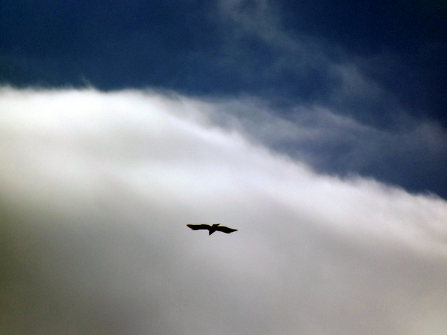 flying high Woodstock, New Brunswick Canada