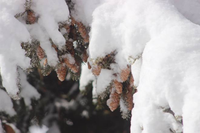 Winter Wonderland on April 5th Hanmer, Ontario Canada