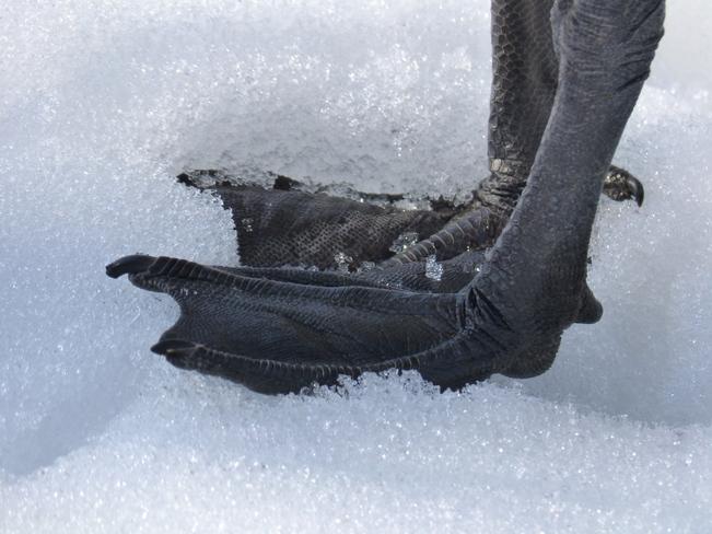 "Great ""shoes""! Ottawa, Ontario Canada"