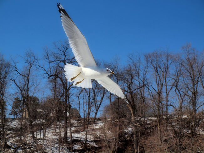 I want to fly like a seagull , 'til I'm free :) Niagara Falls, Ontario Canada