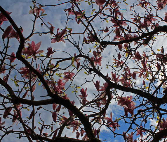 Spring in Chilliwack Chilliwack, British Columbia Canada