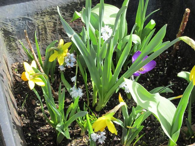the children's spring planter Surrey, British Columbia Canada