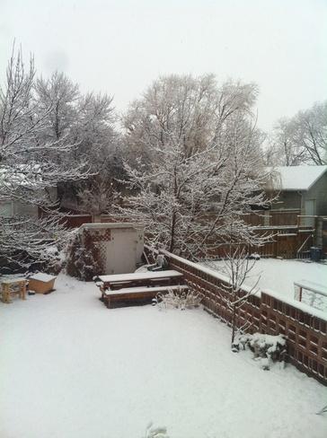 Spring? Lethbridge, Alberta Canada