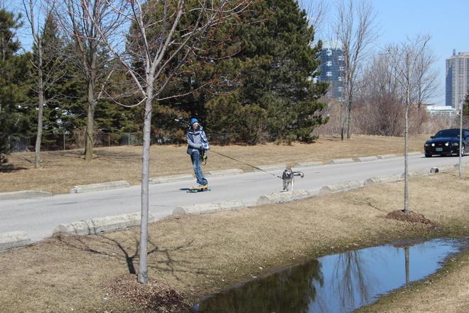 Walking the dog. Toronto, Ontario Canada