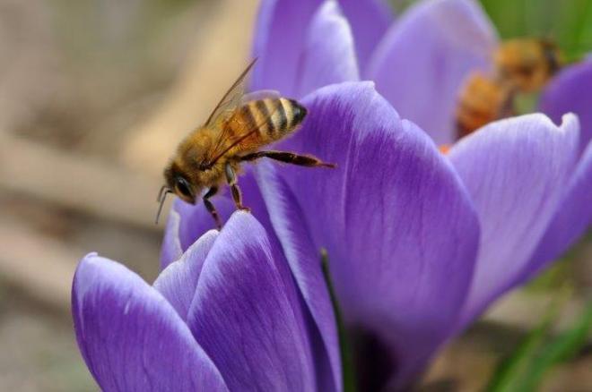 Honey...bees Erin, Ontario Canada