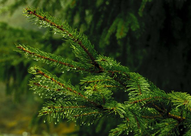 Melting Wintergreen Truro, Nova Scotia Canada
